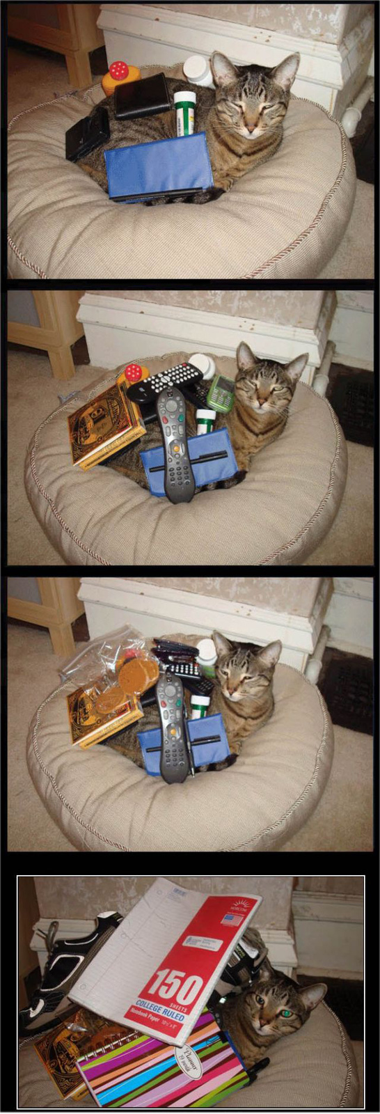 Valentino: Macska