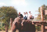 vrobee: Elefánthát