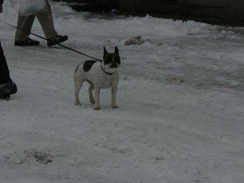 2009-01-23-25-genf-106