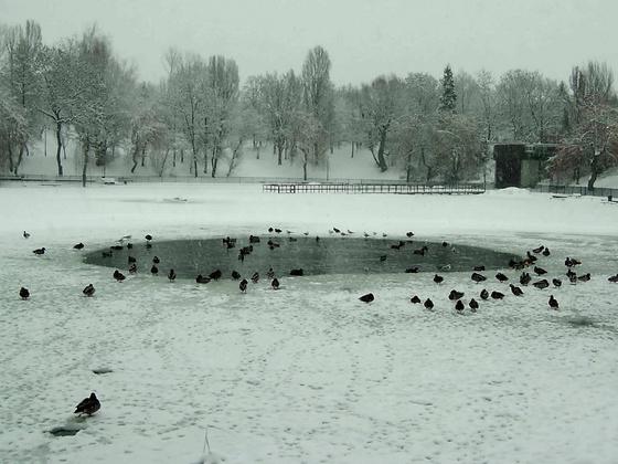 Kvazimir: Bánya tó4