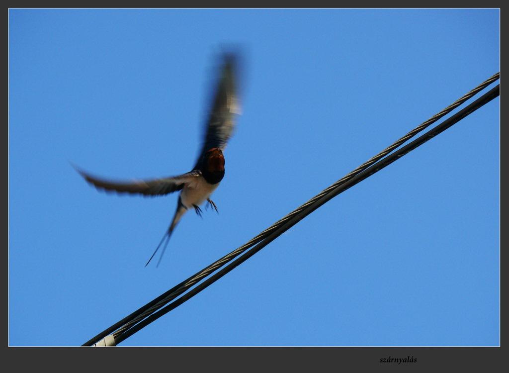 szárnyalás