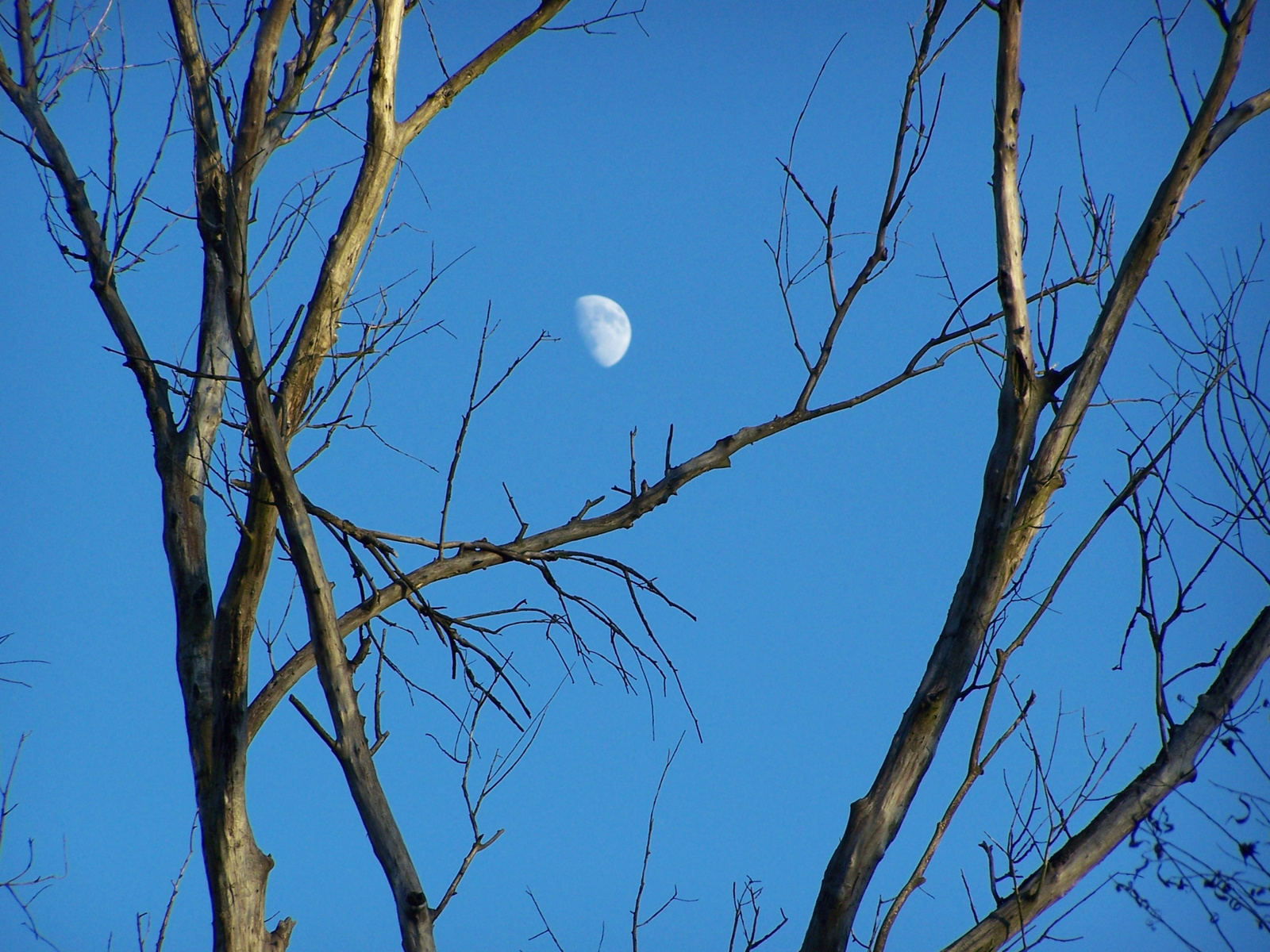 délutáni hold