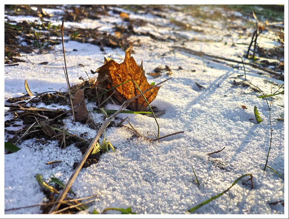 Téli napfény